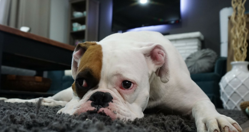 5 Tips for Buying a Pet-Friendly Property